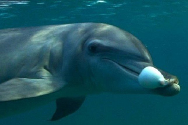 seks z filmem delfinów pończochy mamusie